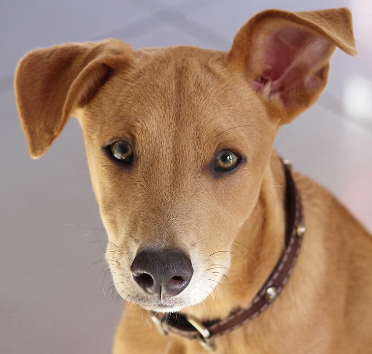 Adopcja psów ! ! !